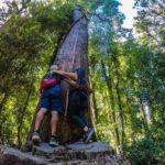 Huilo Huilo - Villarrica Tour